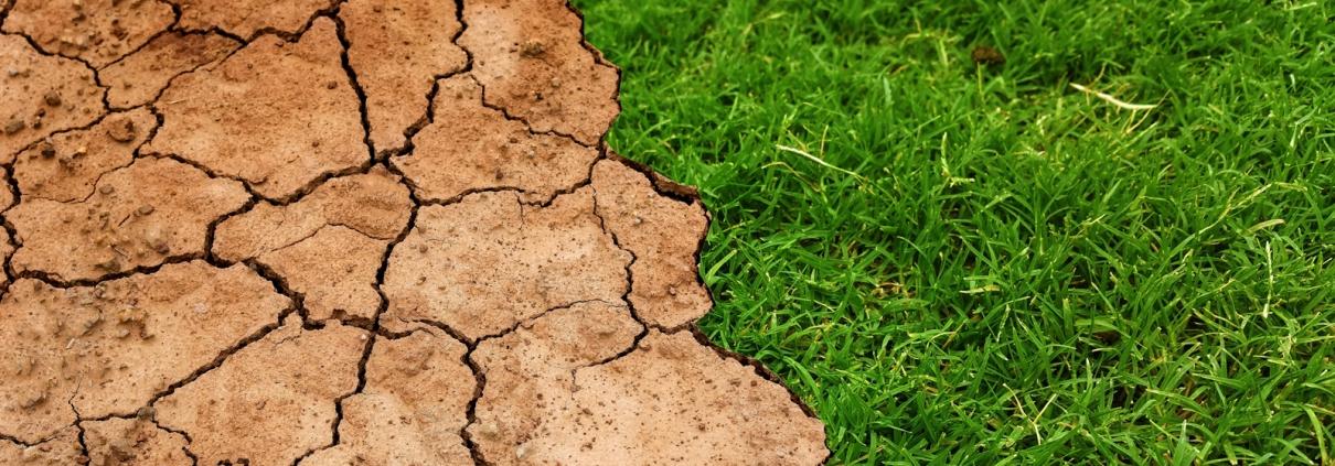 Como evitar los problemas del cambio climatico