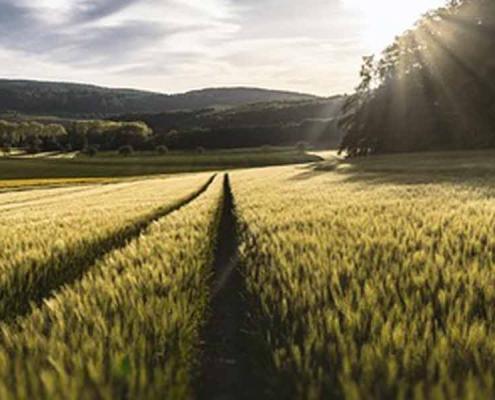Agricultura y cambio climático: consecuencias