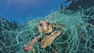 Animales marinos atrapados en plastico