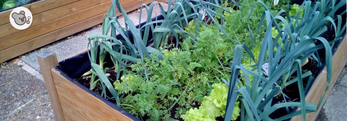 huertos urbanos: qué plantar
