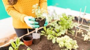 plantando huerto urbano